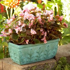 You can make your container garden look more elegant when you decorate your existing containers. We'll give you the step-by-step instructions that will help you make your outdoor garden even more beautiful.