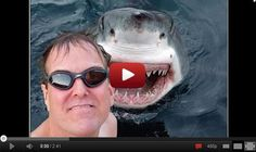 Guy attacked by a shark! Watch now!