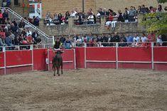 Santacara: Vacas de Santos Zapatería (4) Plaza, Wrestling, Saints, Cows, September, Lucha Libre