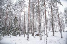 Joulupäivänä satumaisen kauniissa lumimetsässä