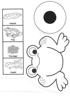 kurbağa kalıp – Okul Öncesi Etkinlik Kaynağınız Your source of preschool activities is waiting for you. You can reach thousands of activities on our site. Frogs Preschool, Preschool Science Activities, Science Crafts, Kindergarten Science, Science For Kids, Life Science, Sequencing Activities, Pond Animals, Lifecycle Of A Frog