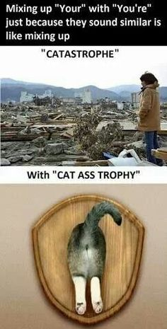 "Grammar humor. Mixing up ""your"" and ""you're"" because they sound similar is like mixing up ""catastrophe"" and ""cat ass trophy."""