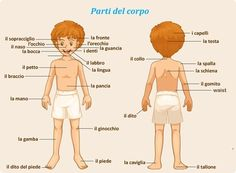 Learning Italian - Parts of the body