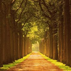 beautiful road surrounded by trees... i want this to be my future driveway