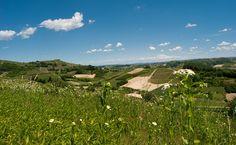 Colline_del_Roero_(Piemonte,_Italia) - Arneis