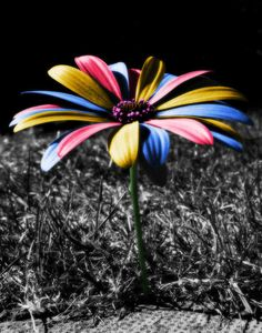 excellent color splash photography