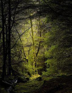 Callander Ancient Woods, Scotland.