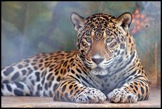 Bahamas Zoo - Photo by David Lewis