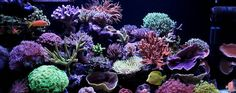 Coral Reef - alive with tiny sea creatures