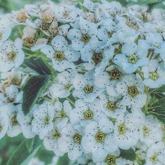 Most of the plants I love are not large or loud. Taken by Alison Pentland. Photo Series, Get Outside, Nature Photos, Faeries, Flora, Plants, Fairies, Plant, Fairy