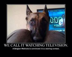 Malinois for ever!