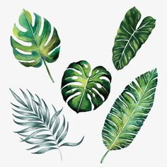 split leaves palm banana tropic forest spring season watercolour jungle tropical botany object isolated on white background illustration Tree Illustration, Botanical Illustration, Watercolor Illustration, Illustrations, Tropical Art, Tropical Leaves, Tropical Flowers, Cactus Flower, Exotic Flowers