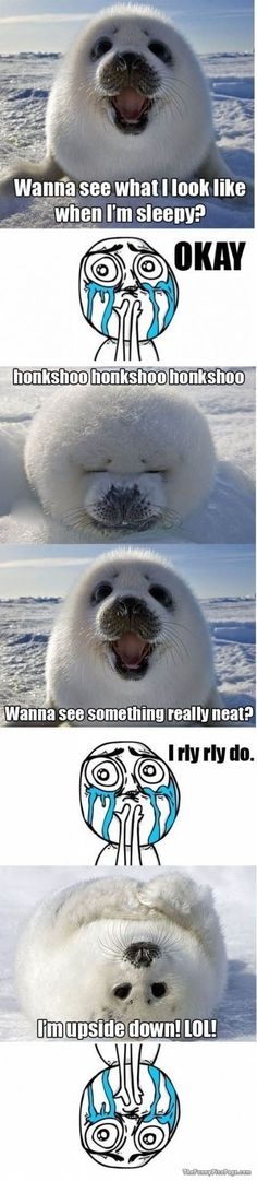 Funny pictures about Baby harp seal. Oh, and cool pics about Baby harp seal. Also, Baby harp seal photos. Funny Animal Memes, Cute Funny Animals, Funny Animal Pictures, Cute Baby Animals, Funny Cute, Funny Memes, Hilarious, Funny Pics, Meme Gifs
