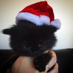 #marrychristmas #christmas #christmascat #santa #chistmastime #cristmasmood #santacat #santakitten #christmaskitten #santacap Black Kittens, Photo And Video, Cats, Animals, Instagram, Gatos, Kitty Cats, Animaux, Animal