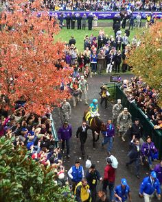 On his way to another win. #breederscup #BC15 #americanpharoah #keeneland by jesskz