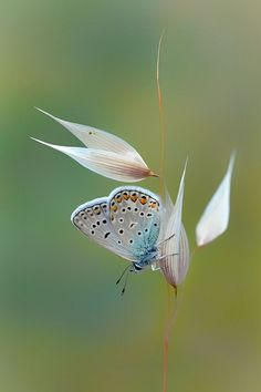 ❋昆蟲(Insect)❋