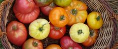 Saatgutgewinnung für Einsteiger - Saatgut selber gewinnen - Aktiv werden - ARCHE…