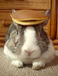 Bunny With A Pancake On Head Pet Rabbit Hat Cute