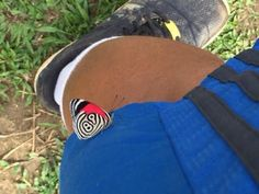 A butterfly with '89' on the side of its wing landed on my shorts.