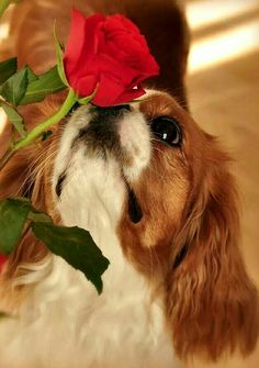 Take time out to smell the roses.