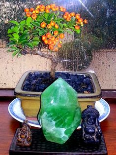 Bonsai Tree and Jade