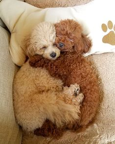 Dog And Puppies Happy .Dog And Puppies Happy Baby Animals Pictures, Cute Animal Pictures, Animals And Pets, Super Cute Puppies, Cute Dogs And Puppies, Doggies, Cute Little Animals, Cute Funny Animals, Toy Poodle Puppies