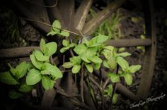 Intertwined   Flickr - Photo Sharing! ©ThompCyn Photography - Cynthia Harris http://www.thompcynphotography.com