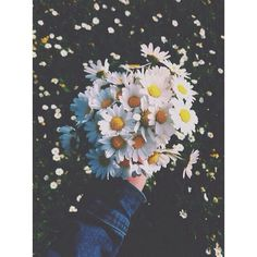 Discovered by Find images and videos about photography, flowers and daisy on We Heart It - the app to get lost in what you love. Pale Tumblr, Tumblr Quality, Daisy Love, Daisy Daisy, Plants Are Friends, Tumblr Photography, Pastel Photography, Jolie Photo, Planting Flowers