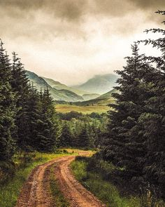 Forest road (Highlands, Scotland) by ( at ( cr. Forest Photography, Amazing Photography, Landscape Photography, Travel Photography, Photography Hacks, Adventure Photography, Artistic Photography, Photography Business, Mountain Paintings