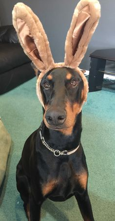 """""""WHY the ears? Because everybody seems to love the Easter Bunny so freakin' much that I thought I'd try to get some of that action..."""""""
