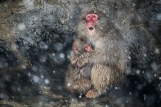 mother's warmth Photo by Takeshi Marumoto — National Geographic Your Shot