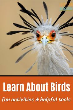 Use these fun activities and helpful tools in your homeschool science lessons when you're studying birds. Tweens will love an interactive lesson about flying creatures and may just find a new hobby or passion. There are so many great things you can do when you're learning about birds. Science Lesson Plans, Science Lessons, Science Experiments, Kids Learning Activities, Hands On Activities, Teaching Kids, Finding A New Hobby, Middle School Science, New Hobbies