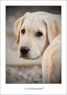 Like my animal and pet photography? find out more on Facebook  www.facebook.com/reposephotographic