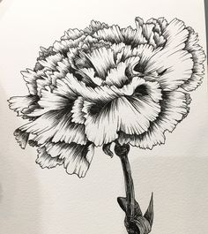 Hand drawing by hanna chung a carnation carnation drawing, carnation flower tattoo, birth flower Carnation Drawing, Carnation Flower Tattoo, Birth Flower Tattoos, Lotus Flower, Flor Tattoo, Arm Tattoo, Sleeve Tattoos, Tattoo Art, Rose Drawing Tattoo