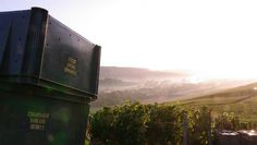 In Champagne begins the Harvest in #Tarlant Winery.