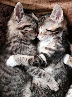Tamk you Pinteres so cute <3 ****