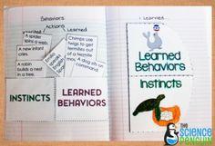 Instincts vs. Learned Behaviors