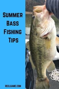 Bass Fishing Tips Summer bass can be tough to find. This guide will help you learn how to catch bass all summer long.Summer bass can be tough to find. This guide will help you learn how to catch bass all summer long. Bass Fishing Bait, Bass Fishing Tips, Walleye Fishing, Ice Fishing, Fishing Tricks, Fishing Rod, Fishing Boats, Fishing Stuff, Carp Fishing