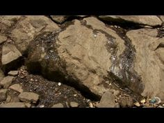 ▶ Survival 101: How to Find Water | Dual Survival - YouTube