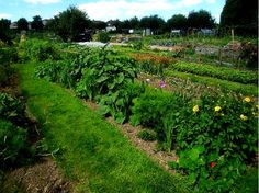 We would love enough land to have a large allotment, where we can grow much of out own food.