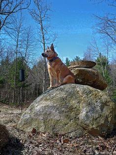 watch dog.