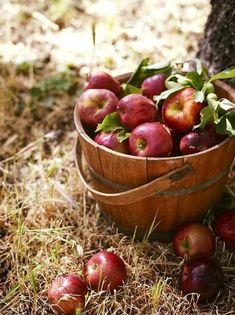 Fall means apple picking! Apple Farm, Apple Orchard, Apple Harvest, Harvest Time, Apple Tree, Red Apple, Apple Fruit, Best Apples For Baking, How To Make Applesauce