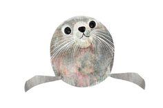 Seal illustration, from http://fiona-halliday.tumblr.com/