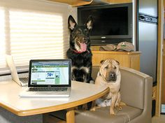 Lifestyle RVing with pets/dogs inside RV. Please visit my Facebook page at: www.facebook.com/jolly.ollie.77