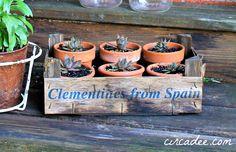 clementine crate garden