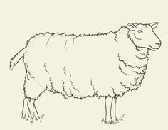 Drawing And Painting | sheep drawing How to draw sheep