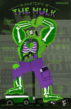 Rachel Ignotofsky Design - The Anatomy of The Hulk Hulk Marvel, Ms Marvel, Marvel Art, Avengers, Captain Marvel, Marvel Characters, Marvel Movies, Nursing Notes, Bruce Banner
