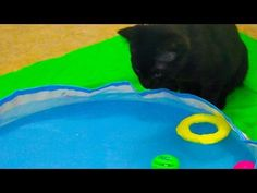 Cute Kitten Playing in Swimming Pool