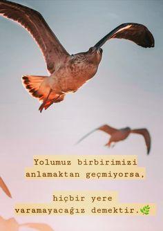 Galaxy Wallpaper, Album, Animals, Istanbul, Islam, Quotes, Animales, Animaux, Animal