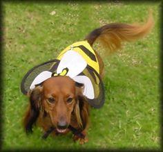 Bee - Halloween